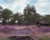 Heidefläche, Ferienhaus und Ferienwohnung auf dem Barkhof Egestorf in der Lüneburger Heide